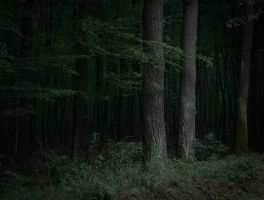 Dark forest Stock by ChristinaIsabella