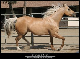 Diamond Trot by KristineKreations
