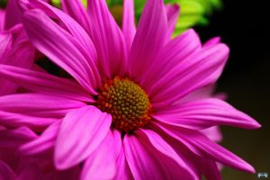 Pretty In Pink 2 by LifeThroughALens84