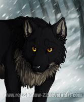 The Lone Wolf by Red-Sinistra