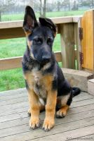 Koda 4 Months Old by Paigesmum