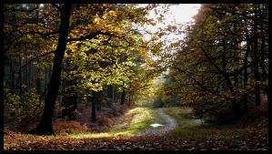 English Autumn by Arawn-Photography