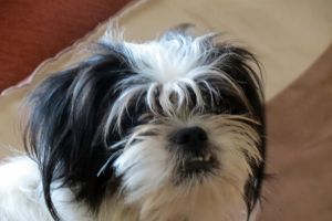 rosie our dog by Sceptre63