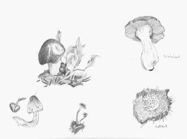 Mushroom Field Sketches by Allison-beriyani