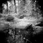 In the swamp_05 by JDV-from-A