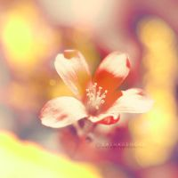May... by onixa