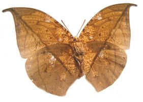 moths and butterflies stock115 by hatestock