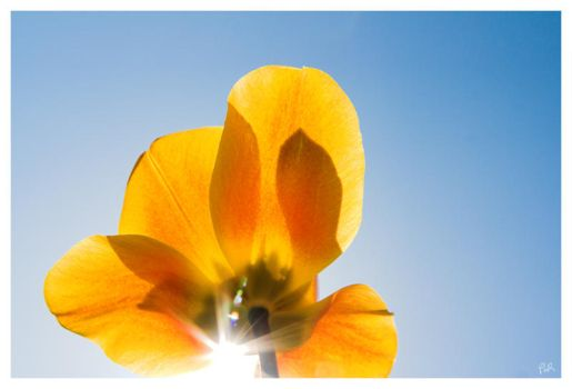 Spring return 2 by salviphoto