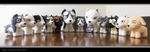 .: Ginga Plush Collection :. by Dunkin-Prime