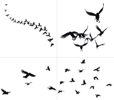 Crows In Flight PNG Stock by Jumpfer-Stock