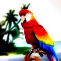 Parrot sketch by summer
