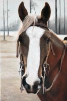 Horse painting by Painting13