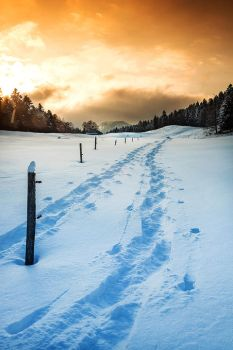 Snow Shoe Tracks by cwaddell