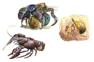 Crustacean by Chevic