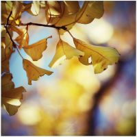 :golden fall: by zvaella