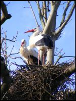 In the storks nest by Katana-Tate