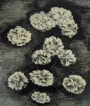 Flowers - lithography by Erijel
