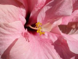 Pink plus Yellow by Lazlo-Moholy
