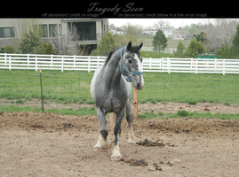 blue roan stock 91 by tragedyseen