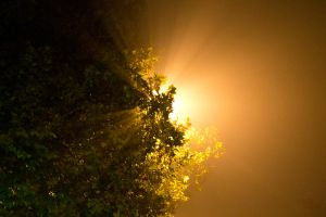 Rays of Fog by Anonimus79