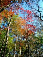 FaLL '12 by JNS0316