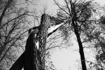 The old dead tree by Vampiria69
