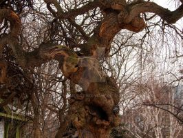 Gnarled Tree by Metalmixer