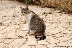 Pregnant stray cat by g4l4d4n