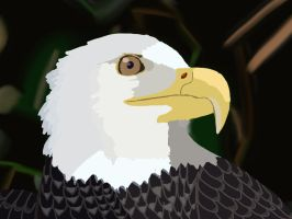 Bald eagle by barnowlgurl23