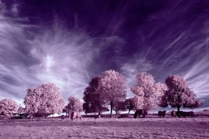 ...of trees, gras n cows 2 by LordGuardian