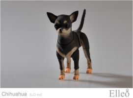 Chihuahua Bjd by leo3dmodels