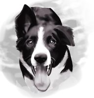 Border Collie by LeechLights