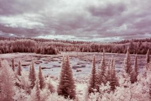 voyageurs beaver pond by BrianWolfe
