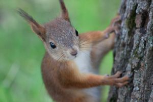 Squrrel by AndreyCherkasov
