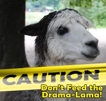 Drama Lama by phaetalon