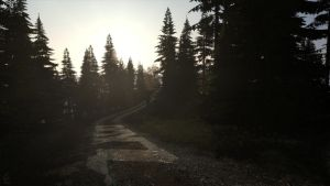 DayZ Forest Trail by guyver1