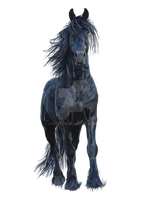 Friesian Horse by Acinoyx