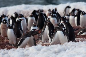 A Penguin Meeting by pinguino