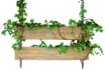 Lians witn wood sign PNG by Atava
