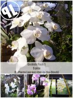 Orchid Pack 1 - Unrestricted by Cat-in-the-Stock