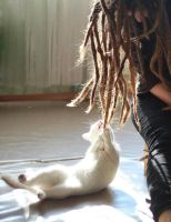 Cat and dreadlocks by Milkman-says-hi