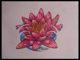 Water Lily Drawing by ritch-g