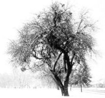 tree in the snow by AvaDieHeart