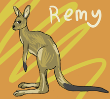 Remy the Kangaroo by MaiShark