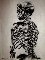 Skeleton  Back View by rehabilitative