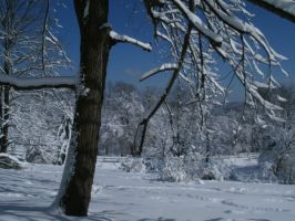 Tree in Winter by SacredJourneyDesigns