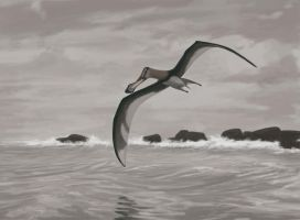 Anhanguera piscator by Paleoartists