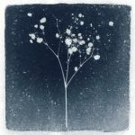 Photogram, Plant 3 by kapanaga