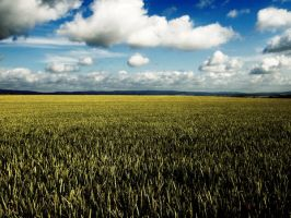 corn field by jacobreisek