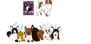 corgi papillon mixes by webkinzfun8